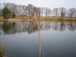 Fischteich Pachten