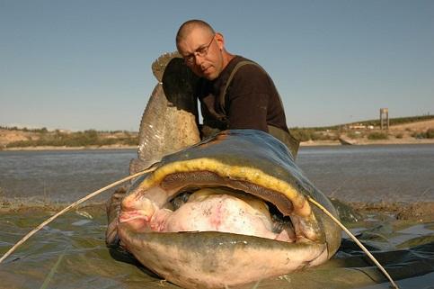 Mit so einem goßen Maul, kann ein Wels locker einen Köderfisch von 1 kg verschlingen.