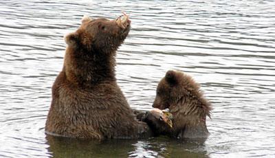 lachsfischerei alaska reiseanbieter